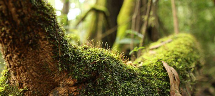 Tree musgo